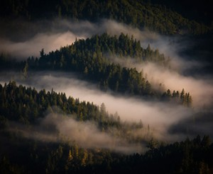 A névoa que toma conta da Costa da Califórnia é um dos fatores que aumentam ainda mais a qualidade dos vinhos La Crema.
