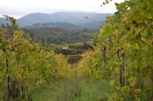 vinho_verde_2
