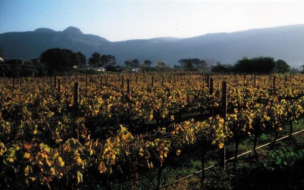 vinhos brancos sul-africanos
