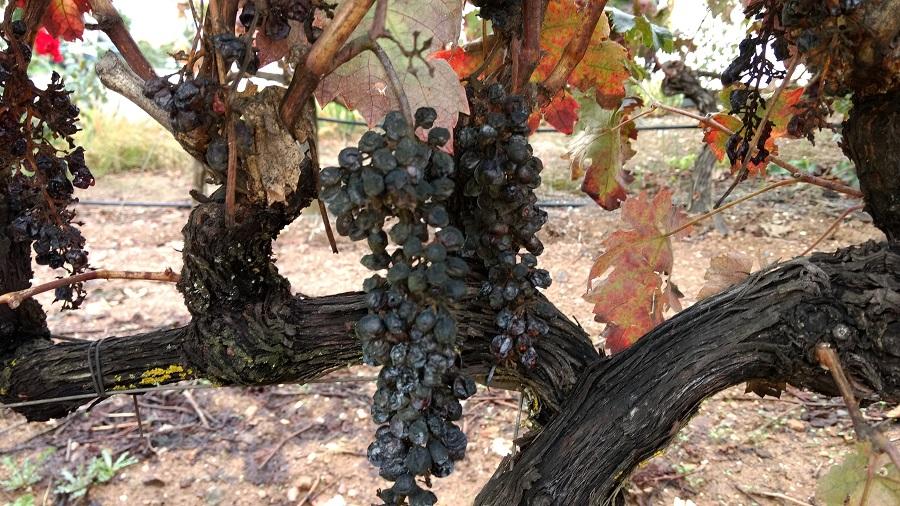 dados mundo vinhos