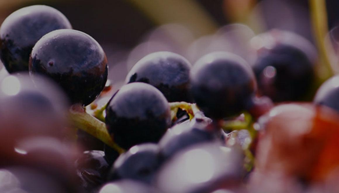 vinho e sustentabilidade